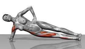Muscles in side plank