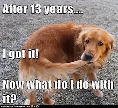Dog & tail