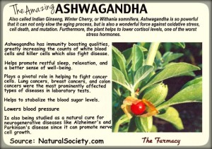 ashwagondha